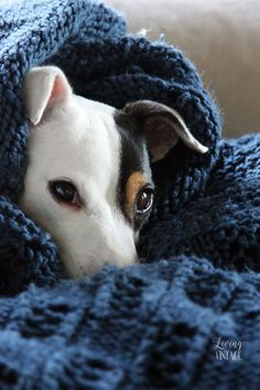 My little Jack Russell terrier just loves to burrow, especially in the fall and winter.