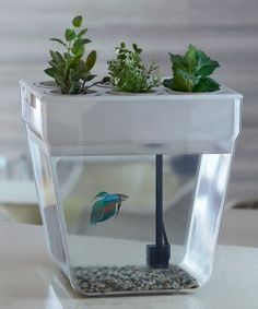 Aqua Farm Self-Cleaning Fish Tank Brilliant Design Idea!!! This small fish bowl is PERFECT for  Beta Fish. They prefer to be alone and in a small space. I Luv it!