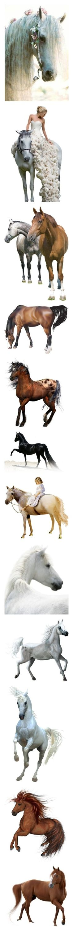 """""""other pets vol I"""" by kristie-miles ❤ liked on Polyvore featuring animals, backgrounds, horses, people, dolls, women, farm, filler, children and horse"""