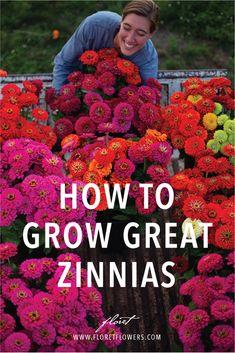 Garden Yard Ideas, Lawn And Garden, Garden Beds, Garden Plants, Zinnia Garden, Garden Totems, House Plants, Growing Flowers, Cut Flowers