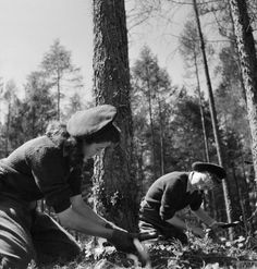 """littlehistorythings: """" 'They Learn to be Lumberjills: Women's Land Army Forestry Training, Culford, Suffolk, from the Ministry of Information Second World War Official Collection. Dig For Victory, Women's Land Army, Land Girls, Army Girls, Confident Woman, Badass Women, Working Woman, Women In History, World War Two"""