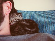 Your person is your favorite person. | 23 Signs You're Too Obsessed With Your Person Sleepy Kitty, Baby Kitty, Here Kitty Kitty, Fauna, Cuddles, Sleeping Kitten, Sleeping Man, Sleeping Beauty, Neck Warmer
