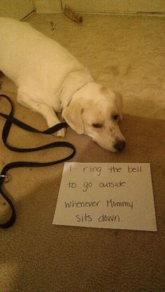 """I ring the bell to go outside whenever Mommy sits down."" ~ Dog Shaming shame - Labrador"