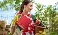 Foto: Getty Images Watering Can, Canning, Gardening, Organic Seeds, Growing Vegetables, Plant Decor, Photography Courses, Vegetable Gardening, Homemade Insecticide