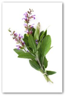 How to grow sage, save money on growing your own herbs.
