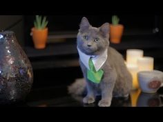 What happens when an enterprising young kitty decides to liquidate some of his real estate holdings? Find out in this hilarious episode from CATastrophes: http://www.sparklecat.com/weird-cat-videos/sunday-catinee-oh-really-estate