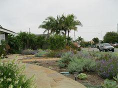 Colorful California Native Front Yard - mediterranean - landscape - orange county - creations landscape designs
