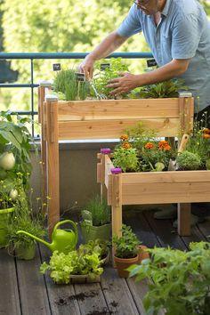 petit potager en escaliers fleurs et potager flowers pinterest fruit. Black Bedroom Furniture Sets. Home Design Ideas