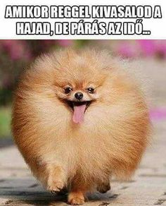 Hát ez rám igaz ‍♀️ Animal Memes, Funny Animals, Cute Animals, Cute Jokes, Funny Cute, Dog Lover Quotes, Dog Lovers, Hahaha Hahaha, Grumpy Cat