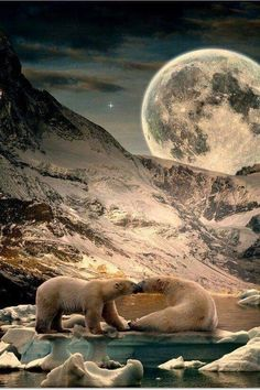 Polar bear, moon and mother nature Beautiful Creatures, Animals Beautiful, Cute Animals, Wild Animals, Animal Pictures, Cool Pictures, Cool Photos, Amazing Photos, Amazing Places