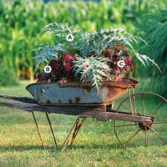 Planting in a great pot can make all the difference. Here, an old rusty wheelbarrow makes a charming container garden. This planting grows best in full sun.  A. Cardoon (Cynara cardunculus) -- 1   B. Perilla 'Magilla' -- 3   C. Diascia 'Diamonte Lavender Pink' -- 3