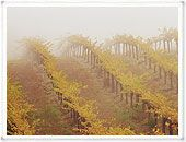 Beringer is the owner of some of the most picturesque vineyards in Napa and there wine is pretty beautiful too.