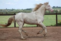 The Lusitano Collection