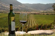 Vino del Valle de Colchagua - Rancagua Palermo, Chile, South America, Bottle, World, Places, Santa Cruz, Fences, I Love
