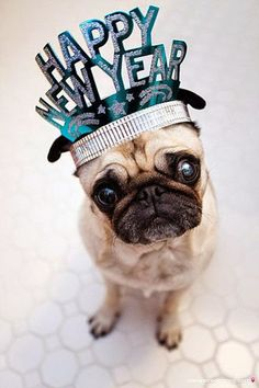 NYE party...ok this isn't a bulldog although its too sweet too pass up.  Happy New Year!!!