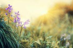 100 de citate de la autori celebri – GOGU Nature Pictures, Free Pictures, Pictures Images, Purple Flowers, Spring Flowers, Photo Café, Green Screen Backgrounds, Free To Use Images, Sweet Violets