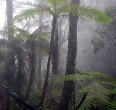 Humidity: A quantity representing the amount of water vapor in the atmosphere or a gas. The water on a foggy morning.