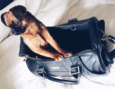 Chilling in my new #MERIKHbag, life is good...   #MERIKHbags #Petcarrier in #leather