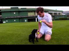 Andy Murray + Wimbledon Puppehs, Part III — Cute Overload