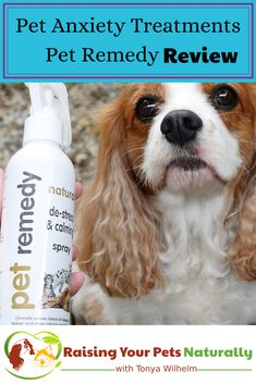 Dog and cat anxiety treatment. Pet Remedy essential oils for pet anxiety review. If you have a dog or cat with anxiety, you don't want to skip this natural calming aid. #sponsored #raisingyourpetsnaturally #doganxiety #essentialoils #essentialoilsforpets #essentialoilsfordogs