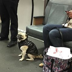 Dog in a leather jacket. So?