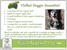 Chilled Doggie Smoothies - a yummy, cool, healthy treat for your dog!
