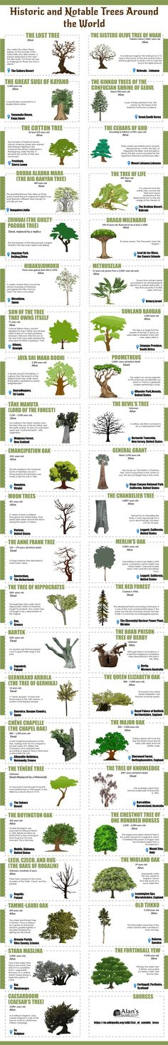 Post with 1059 votes and 63832 views. Tagged with history, culture, travel, trees, mythology; Shared by Most notable trees of the world Book Infographic, Landscaping Around Trees, Backyard Plan, Tree Forest, Science And Nature, Natural World, Botany, Landscape Design, Landscape Photography