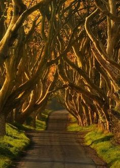 The Dark Hedges, Northern Ireland by tiquis-miquis