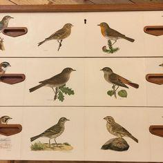 #sneakapeak #dresser #byrå #vonWright #svenskafåglar #birds #butterflyvintage