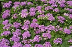 Mosquito Repellent Plants       As summer fast approaches, I would like to suggest plants that will repel mosquitoes in your landsc...