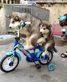 """* * BIG DOG: """" Noes son, dis isn'ts fun; it be stewpid ! """""""