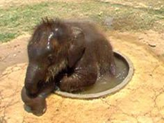 Small Jacuzzi For Baby Elephant