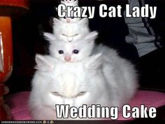 Crazy Cat Lady Wedding Cake - I Love Funny Cat Pictures Baby Animals, Funny Animals, Cute Animals, Funny Horses, Small Animals, Funniest Animals, Nature Animals, Crazy Cat Lady, Crazy Cats