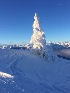 Tiefschnee in Flachau #flachau #visitflachau #snow #welovewinter