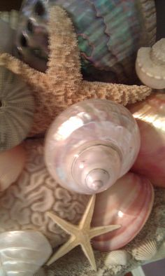 Collection of beautiful shells.