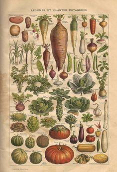 Légumes et plantes potagéres