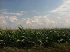 European Corn