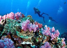 Just imagine exploring the magnificent coral reefs of Sodwana Bay, a popular world tourist destination and scuba diver and fisherman's paradise. Sodwana Bay is situated on the KZN North Coast, within the Greater St Lucia Wetland Park between St. Lucia and Lake Sibhayi, and lies adjacent to Africa's southern-most coral reefs.