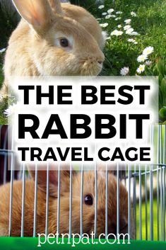 A good rabbit travel cage is so important! Whether off to the vet, shifting house, or going to a show, get the best rabbit travel cage! Pet Bunny Rabbits, Pet Rabbit, Rabbit Toys, Bunnies, Animals For Kids, Animals And Pets, Funny Animals, Farm Animals, Bunny Cages
