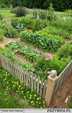 This is such a cute garden
