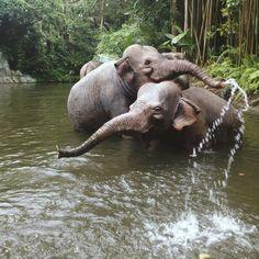 elephant river swim