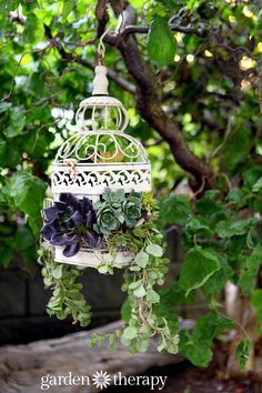 How to Make a Birdcage Succulent Planter