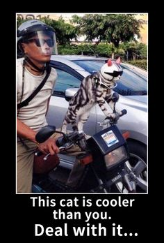 This cat is cooler than you. Lol!