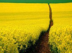 Mellow Yellow House of Beccaria Beautiful World, Beautiful Places, Beautiful Pictures, Beautiful Scenery, Beautiful Roads, All Nature, Amazing Nature, Nature Tree, Yellow Fields