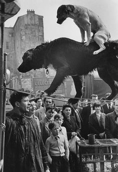 Marc Riboud, Two Dog Acrobats, Paris, 1953 - I'm always sad seeing animals performing. Just have this weird feeling they have beein tricked into it for a biscuit, some food or a cuddle. Marc Riboud, Photo Vintage, Vintage Dog, Vintage Circus, Vintage Photographs, Vintage Photos, Design Visual, Black And White Photography, Old Photos