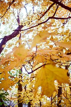 #autumn #fall #newengland #ri #photography #leaves #nature