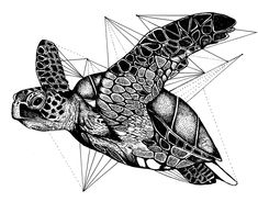 Geometric turtle on Behance