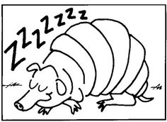 a sleeping armadillo coloring page a texas animal
