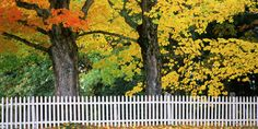 10 things pro landscapers do to their yard every fall.