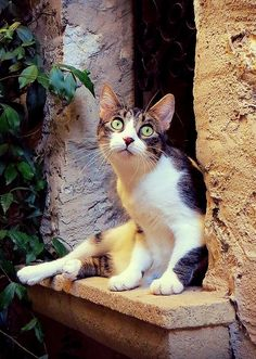 """street cat, saint paul de vence (france) 